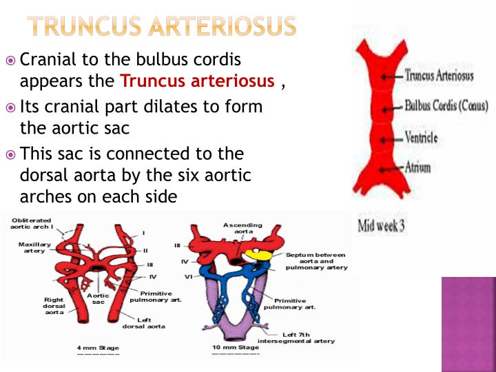 Truncus