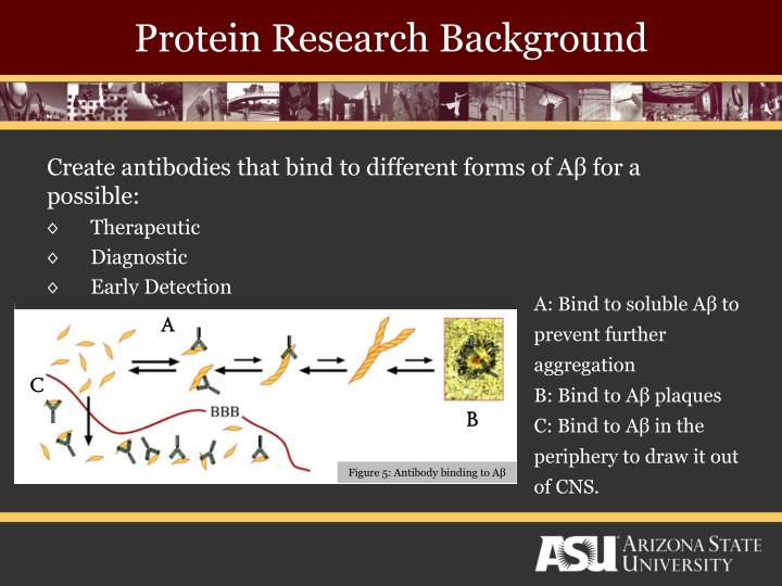 Protein Research Background