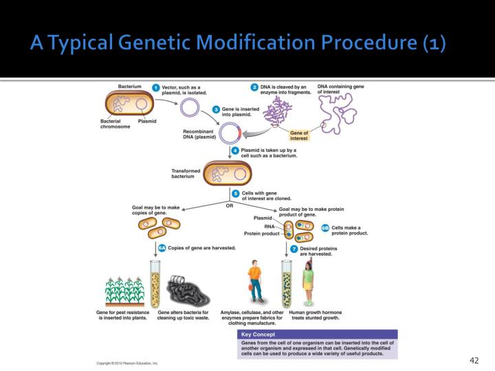 A Typical Genetic Modification Procedure (1)