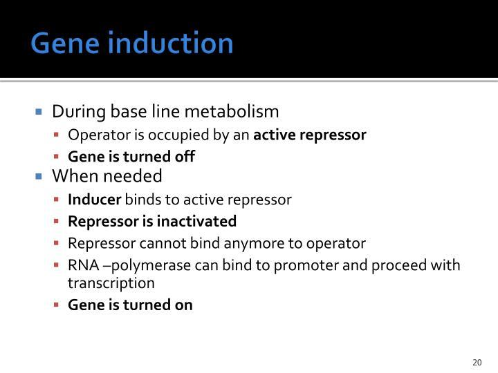 Gene induction