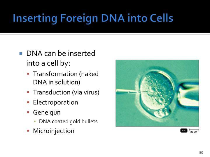 Inserting Foreign DNA into Cells