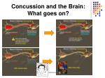 concussion and the brain what goes on2