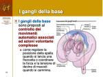 i gangli della base1