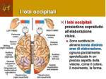 i lobi occipitali