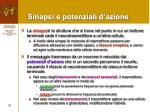 sinapsi e potenziali d azione