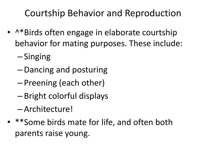 Courtship Behavior and Reproduction