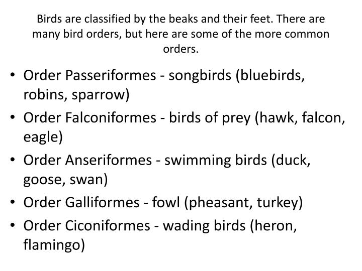 Birds are classified by the beaks and their feet. There are many bird orders, but here are some of the more common orders.