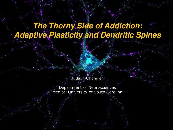 The Thorny Side of Addiction: