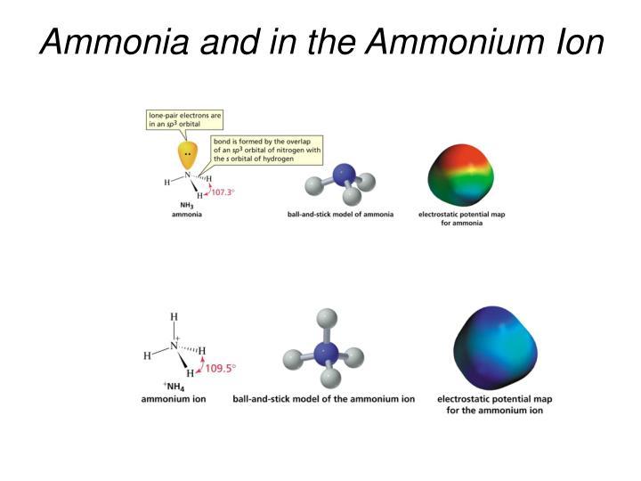Ammonia and in the Ammonium Ion
