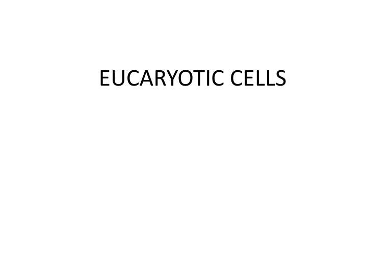 EUCARYOTIC CELLS