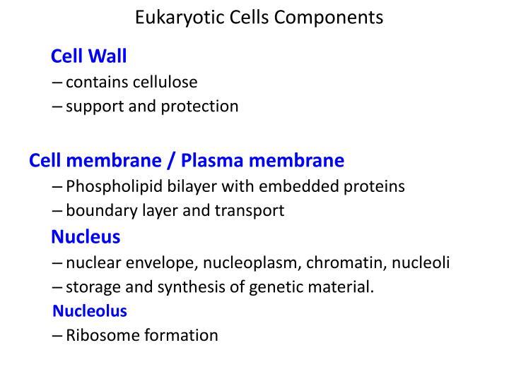 Eukaryotic Cells Components