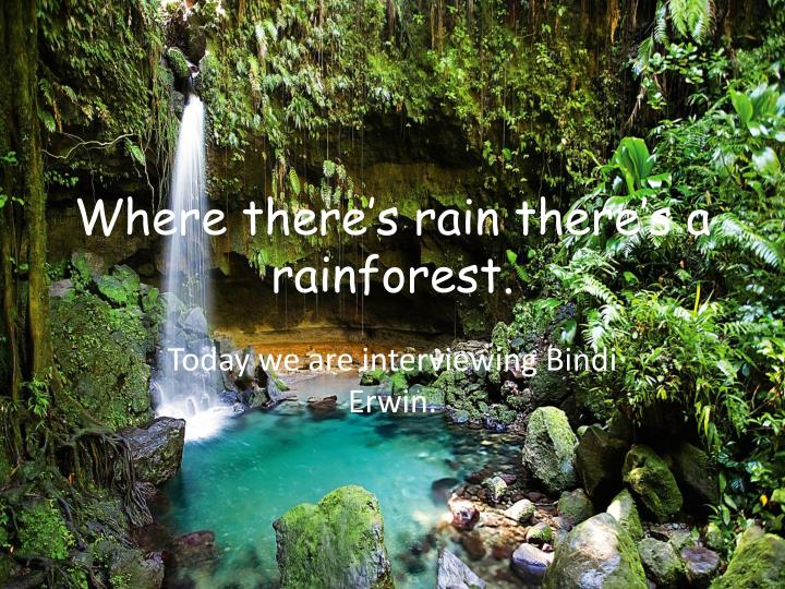 Where there s rain there s a rainforest