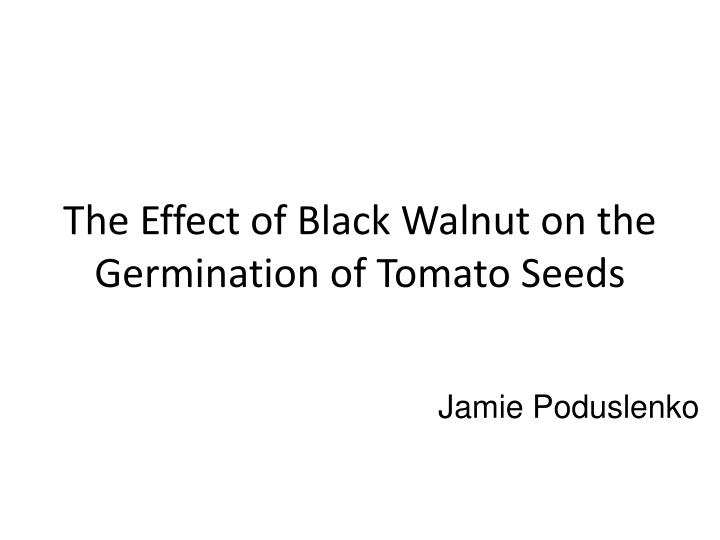 the effect of salt water on seed germination Hot water for 5 min and prechilling for 10 days did not show positive effect on germination improvement the study result of scarification of seeds of acacia angustissima showed that seeds soaking in hot water cause seed germination induction but increasing duration of seed contact with hot water leads to decline of seed germination percentage.