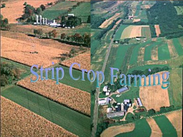 Strip Crop Farming