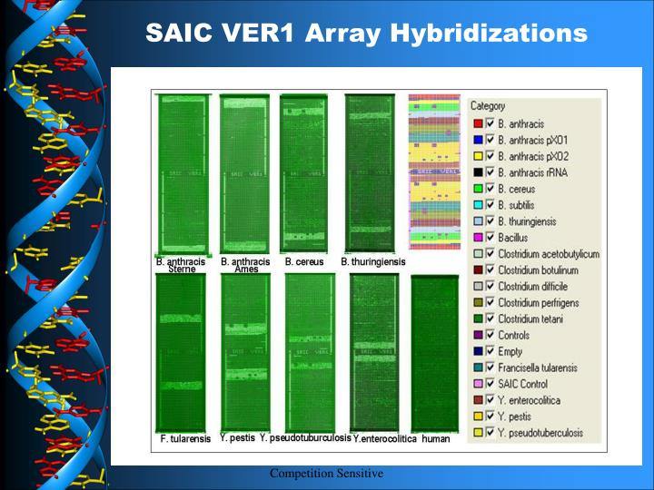 SAIC VER1 Array Hybridizations