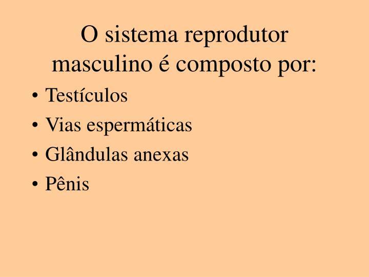 O sistema reprodutor masculino composto por
