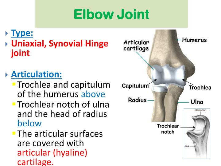 Ppt Elbow Joint Powerpoint Presentation Id3084731
