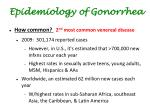 epidemiology of gonorrhea