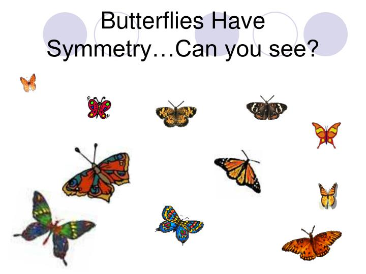 Butterflies Have Symmetry…Can you see?