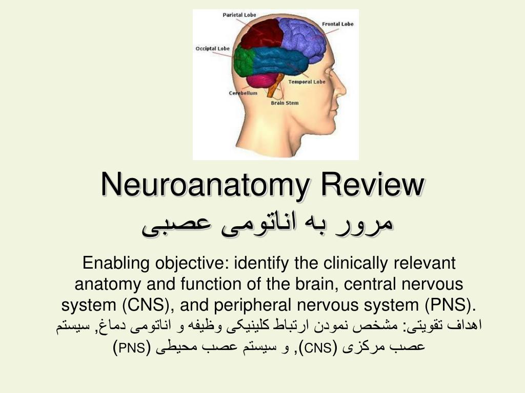 PPT - Neuroanatomy Review مرور به اناتومی عصبی PowerPoint ...