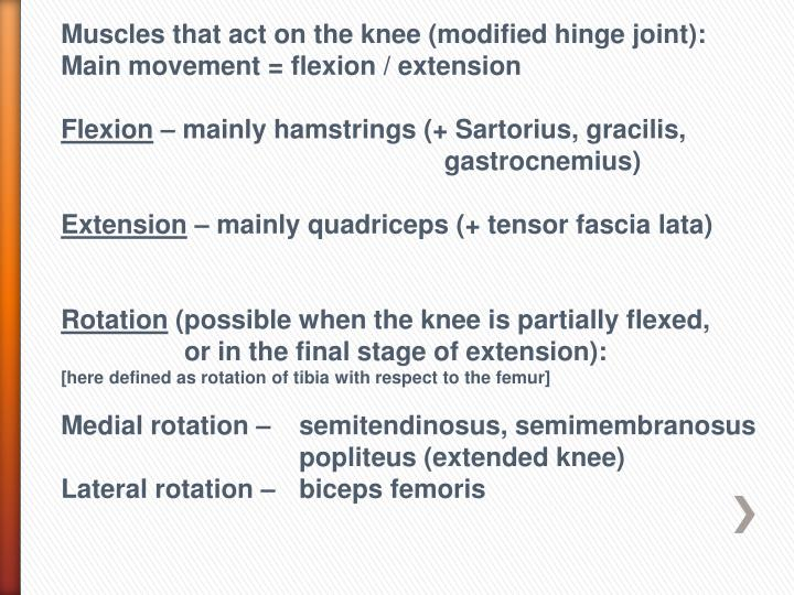 Ppt Knee Joint And Muscles Of Leg Powerpoint Presentation Id3088891