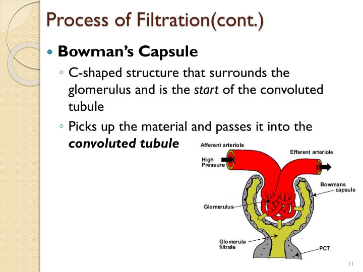 Process of Filtration(cont.)