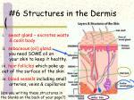 6 structures in the dermis