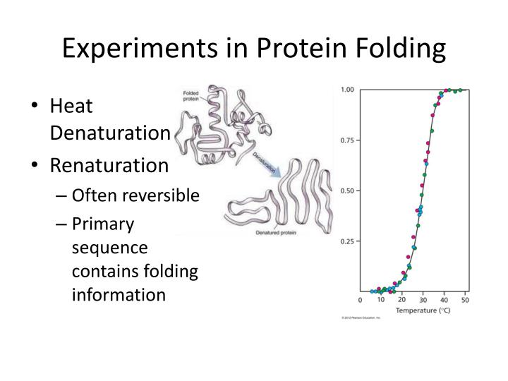Experiments in Protein Folding