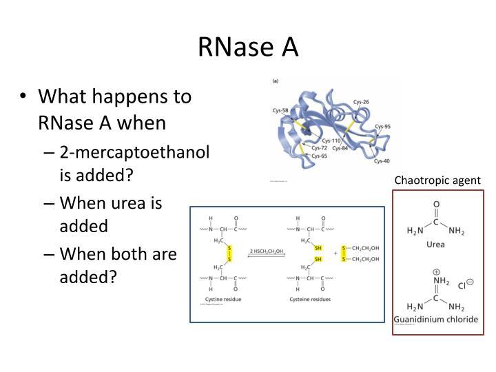 RNase