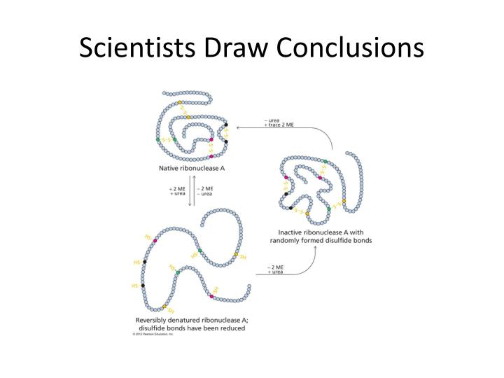 Scientists Draw Conclusions