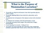 what is the purpose of mammalian lactation