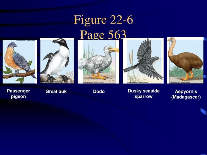 Figure 22-6