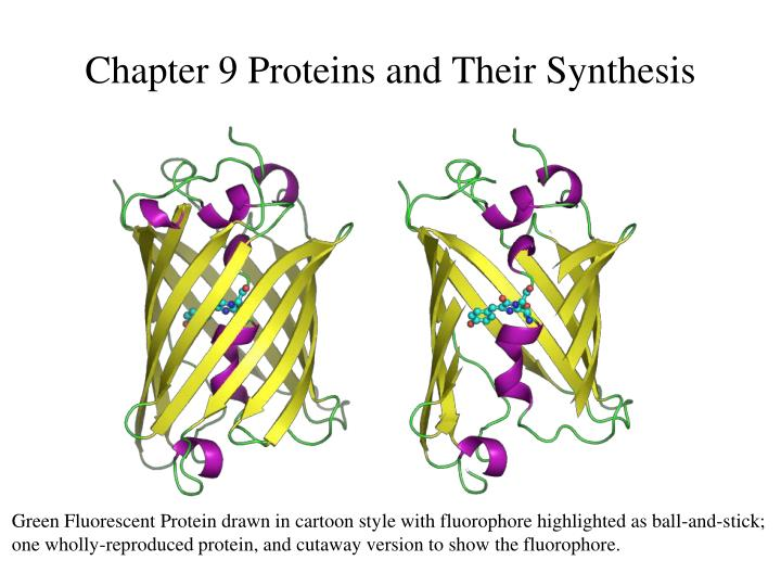 chapter 9 proteins and their synthesis n.