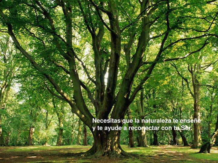Necesitas que la naturaleza te enseñe