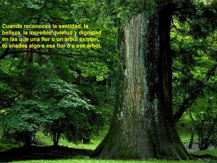 Cuando reconoces la santidad, la belleza, la increíble quietud y dignidad en las que una flor o un árbol existen, tú añades algo a esa flor o a ese árbol.