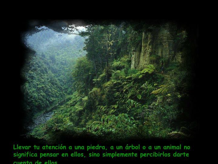 Llevar tu atención a una piedra, a un árbol o a un animal no significa pensar en ellos, sino simplemente percibirlos darte cuenta de ellos.
