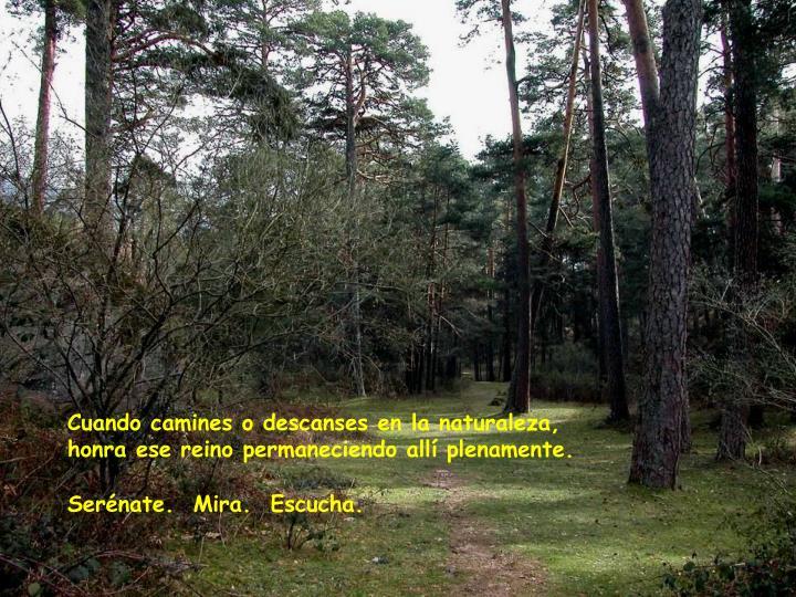 Cuando camines o descanses en la naturaleza,