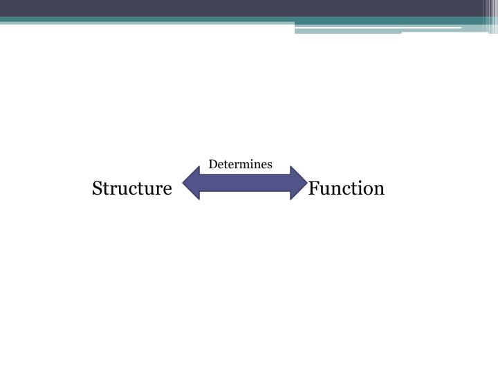Structure                             Function