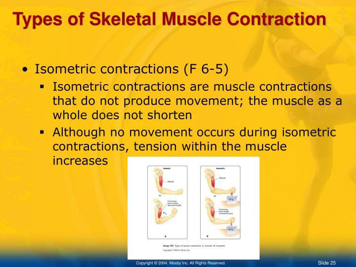 Types of Skeletal Muscle Contraction