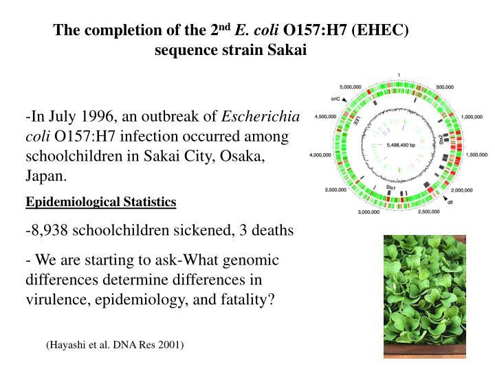 escherichia coli 0157 h7 essay example Escherichia coli (e coli) bacteria these tests are often ordered when a community-wide e coli outbreak is suspected, for example  escherichia coli o157:h7.