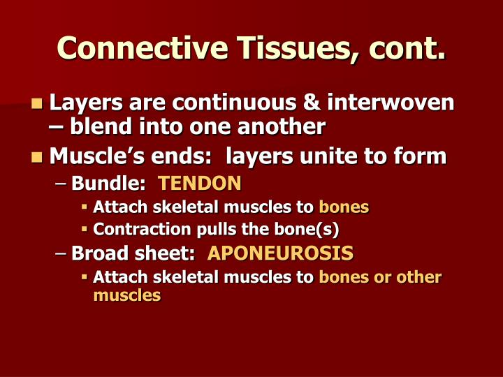 Connective Tissues, cont.