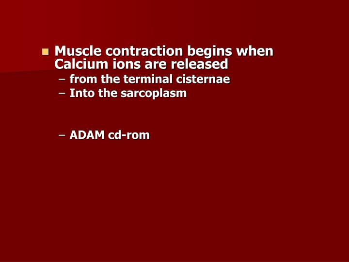 Muscle contraction begins when Calcium ions are released