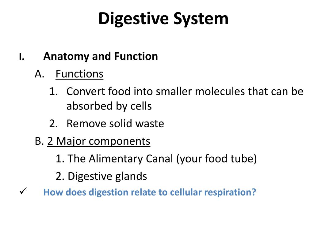 Ppt Digestive System Powerpoint Presentation Id3095025