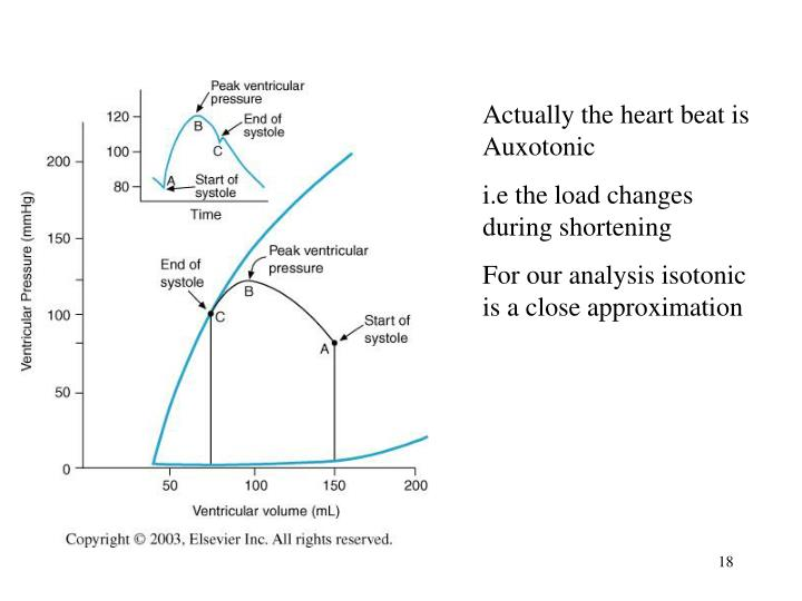 Actually the heart beat is Auxotonic