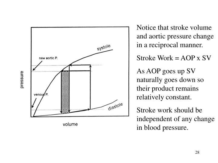 Notice that stroke volume and aortic pressure change in a reciprocal manner.