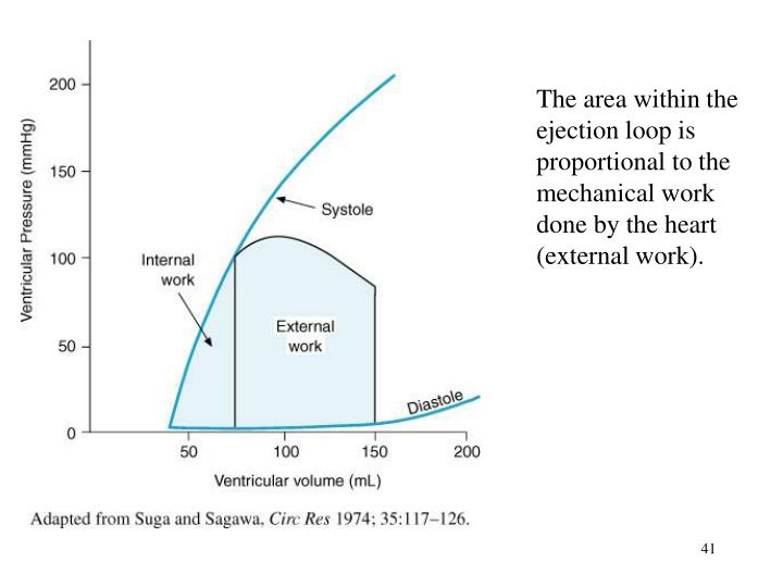 The area within the ejection loop is proportional to the mechanical work done by the heart (external work).