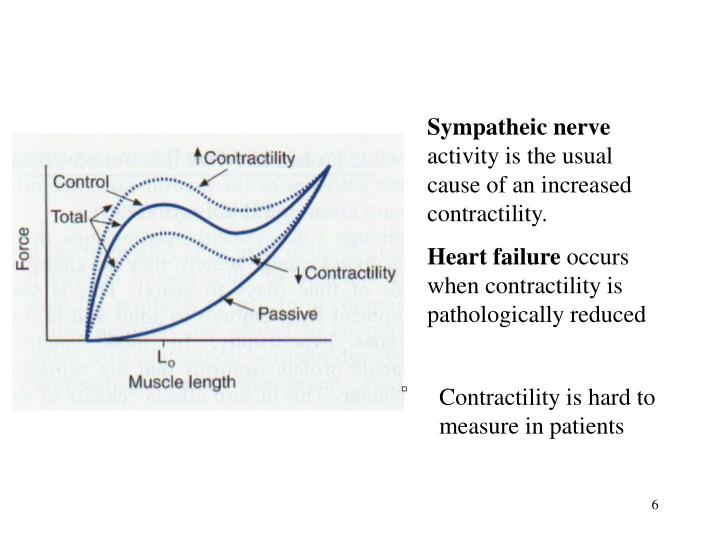 Sympatheic nerve