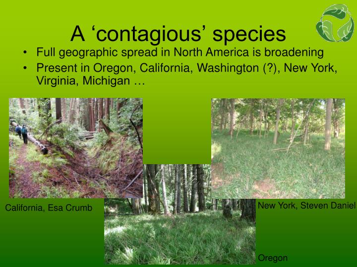 A contagious species