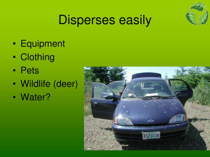 Disperses easily