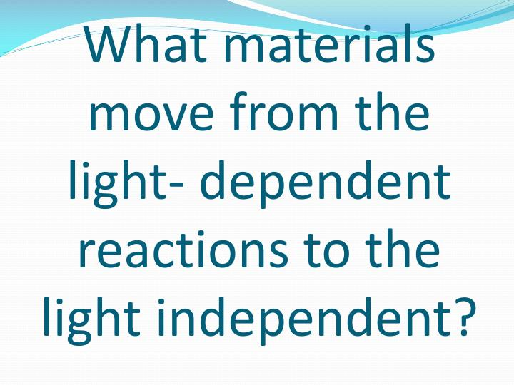 What materials move from the light- dependent reactions to the